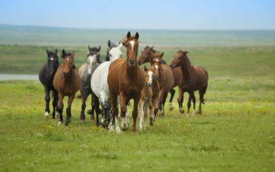 Opitaan hevosilta johtamisesta, osa III: Kriisijohtaminen